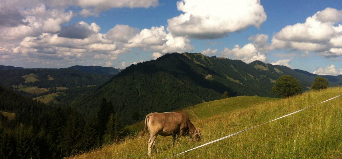 Sommerhüttenfreizeit im Allgäu